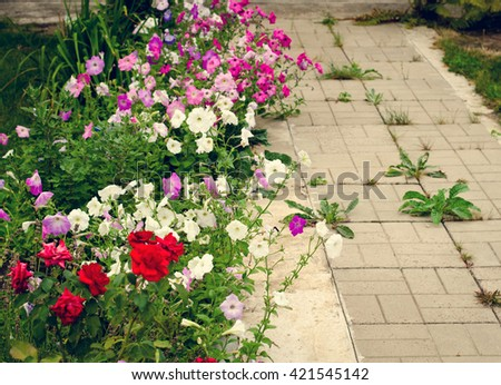 Stone path in the garden flanked with colorful flowers - stock photo