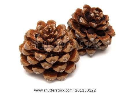 Stone pine, Pinus Pinea, isolate don white background - stock photo