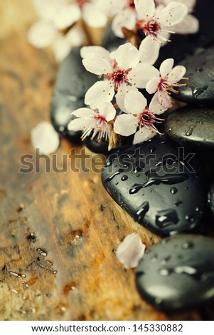 Stone spa , branch blossoming cherry on wooden background - stock photo