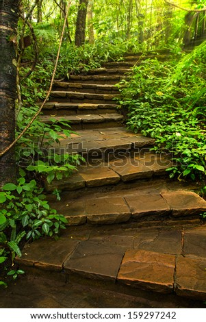 Stone Stairway to deep forest  - stock photo