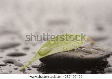 Stone with leaves and water drops, close up - stock photo