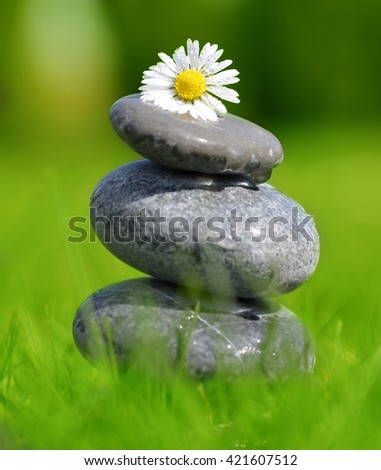 Stones and daisy in grass, soft focus. Spa concept - stock photo