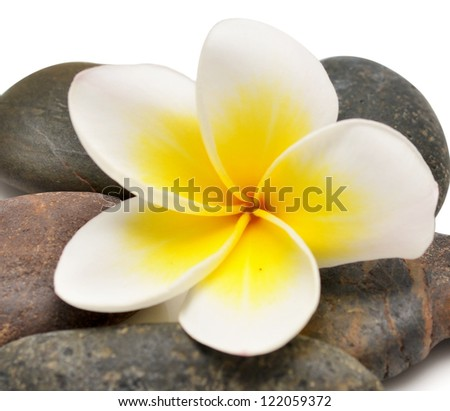 stones and flower isolated on white - stock photo