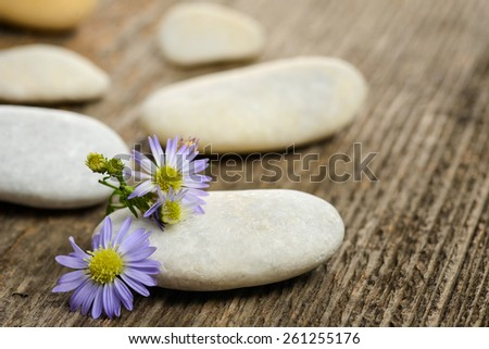 Stones and flowers on wood background - stock photo