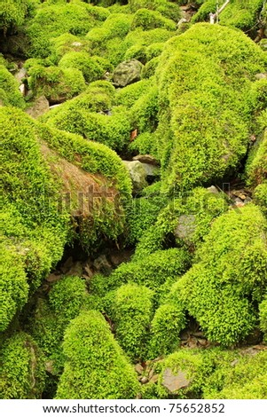 Stones covered with moss - stock photo