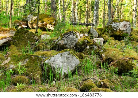 stones covered with moss in spring forest - stock photo