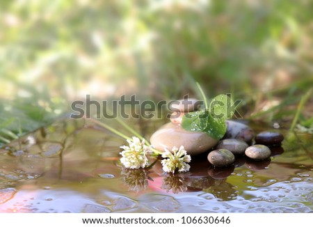 Stones of Spa and flowers and green leaves of a clover lie in water the waters covered with drops - stock photo