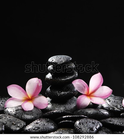 Stones tower with two frangipani on wet pebble