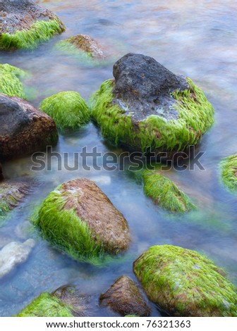 Stones with algae on the seashore. Composition of nature