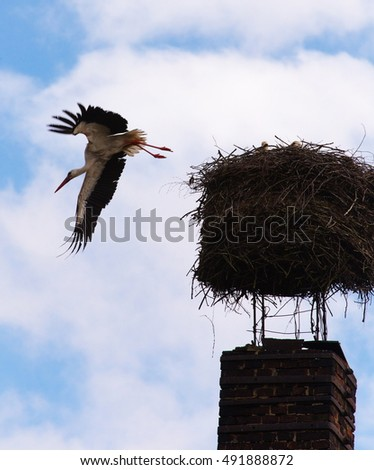 Stork flying out of the nest