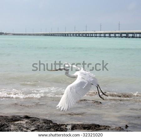 stork in flight - stock photo