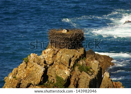 Stork nest at the edge of the cliff, Cabo Sardao, Alentejo, Portugal - stock photo