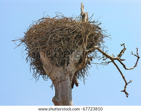 Stork nest on a dead tree in Morocco