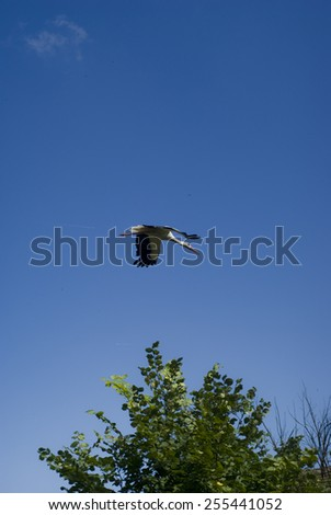 Stork on clear blue sky - stock photo