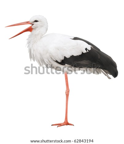 Stork on his long legs and an open beak. Symbol of pregnancy. - stock photo