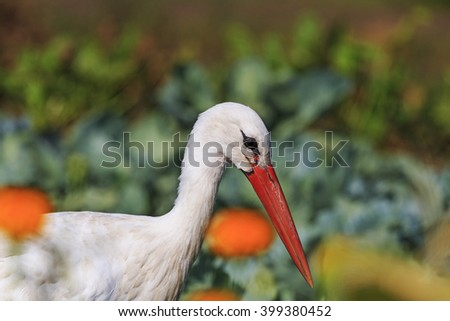Stork portrait of flowers, a bird which brings children - stock photo