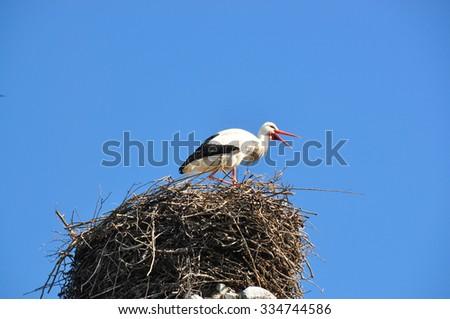 Stork wildlife scenery - stock photo