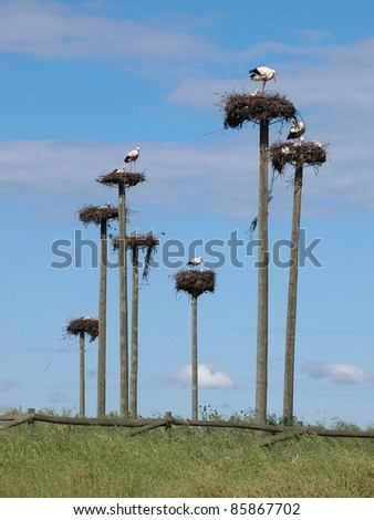 Storks in a protected area in Caceres, Spain - stock photo