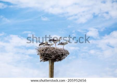storks nest family on blue sky background - stock photo