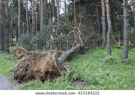 Storm consequences in the city of Minsk. Broken tree after the hurricane which has passed over the capital of Republic of Belarus 7.13.2016