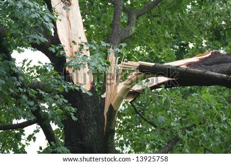 Storm Damage - stock photo