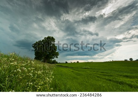 Storm on green field - stock photo