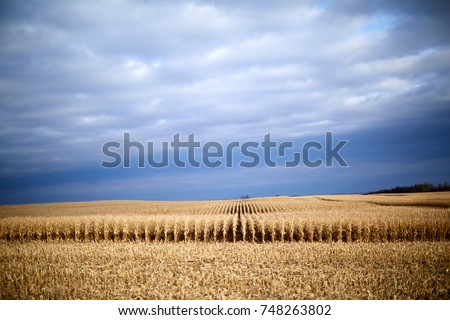 Stormy farm landscape during autumn harvest with a partly harvested field of maize under a grey cloudy sky with vignette