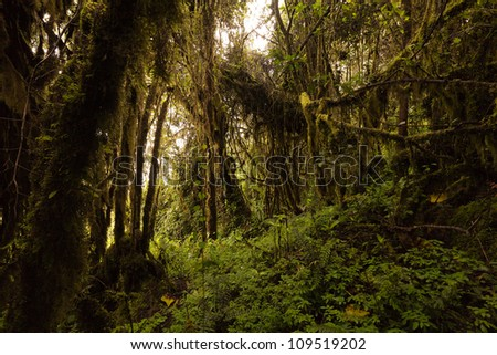 Story tale vegetation at around 4000m altitude in Ecuadorian Andes. - stock photo