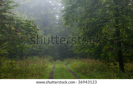 Straight ground road leading across misty late summer deciduous forest with hornbeam branches in foreground