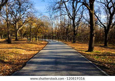 Straight road trough the forest - stock photo