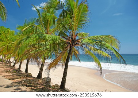 Straight row of palm trees near the beach - stock photo