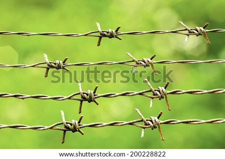 Strands of barb wire isolated on nature background
