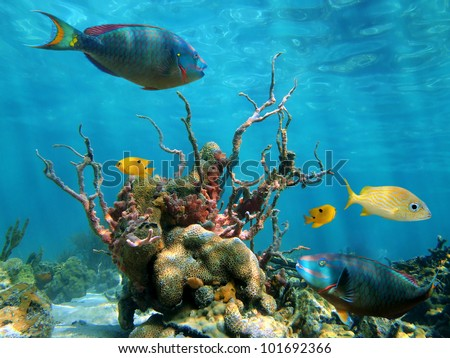 Strange forms of underwater marine life with colorful fish and the water surface in background - stock photo