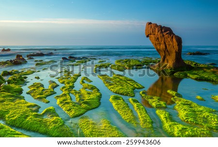 Strange rocks and moss in the morning at Co Thach beach , Tuy Phong , Binh Thuan province , Vietnam - stock photo