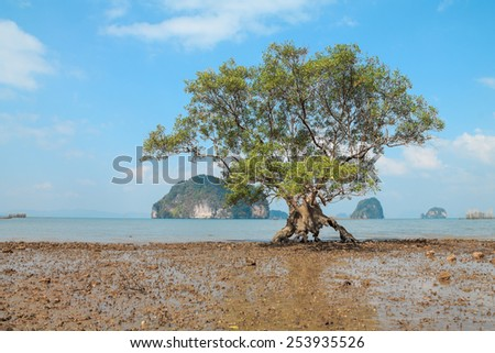 Strange tree on the beach at low tide