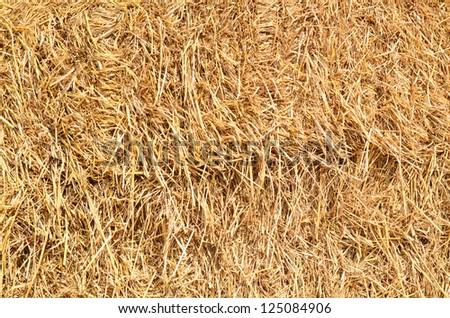 straw background texture - stock photo