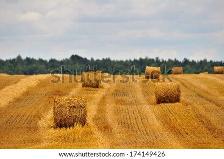 straw bales in summer  - stock photo