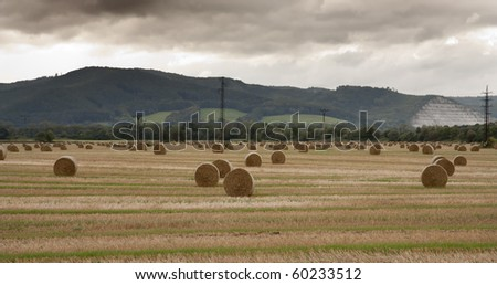 Straw bales in the field after the harvest