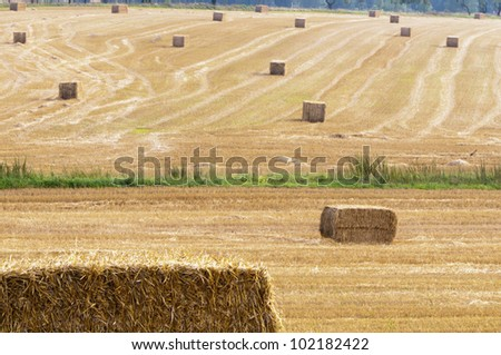 Straw bales in the field after the summer harvest grain - stock photo