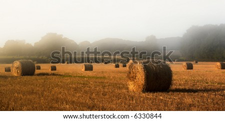 straw bales in the misty morning sun - stock photo