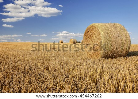 Straw bales on farmland / Harvested field with straw bales in summer  - stock photo