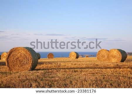 Straw bales on farmland , near the ocean