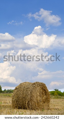 Straw Haystacks on the grain field after harvesting  - stock photo