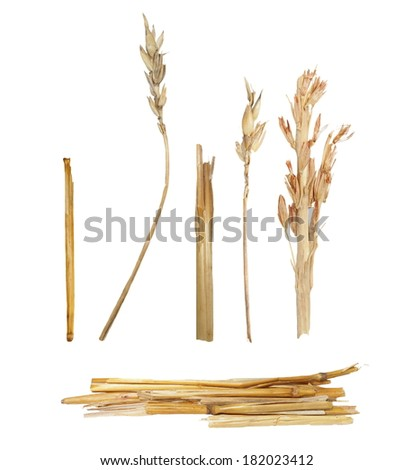 straw isolated on white background for design and construction - stock photo