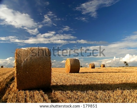 straw rolls (bales) after crop of the grain field with blue cloudy sky