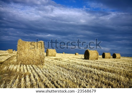 straw rolls on the harvest field