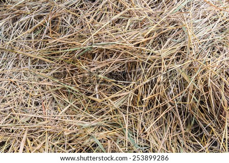 straw texture and background - stock photo
