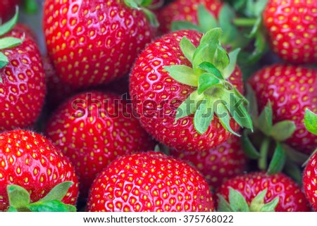 Strawberries ( Fragaria ) - small vitamin bomb and delicacies, fresh fruit for the fruit salad - stock photo