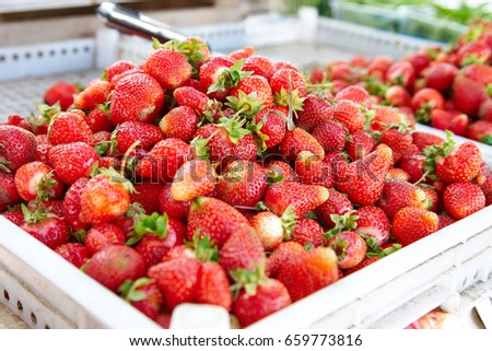 Strawberries in a box for sale on the farm market
