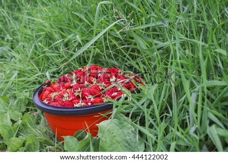 Strawberries in basket on grass
